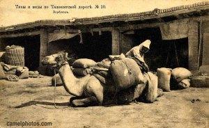 loading the pack saddles