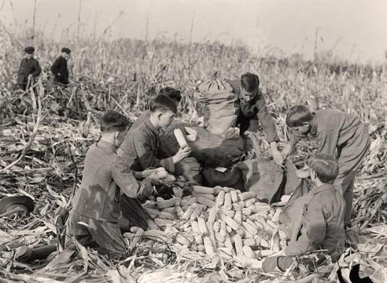 Boy Scouts Husking Corn. It was taken in 1917