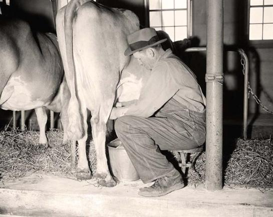 Man Milking a Cow. It was made 1938