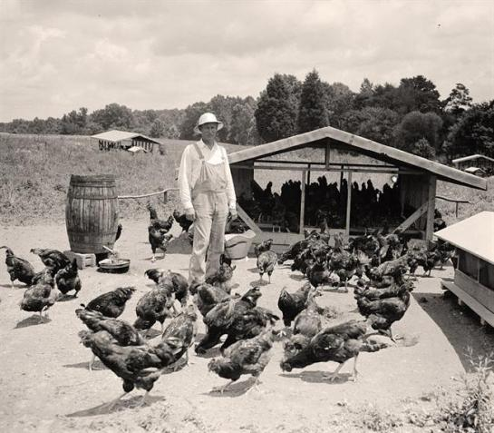 Man Raising Chickens. It was created in 1938