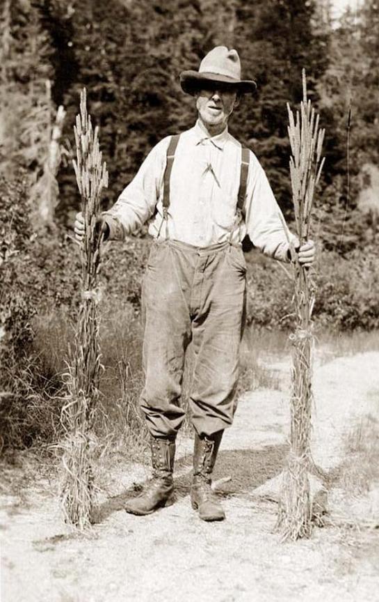 Mr. Johnson holding stalks of timothy. It was taken in 1916