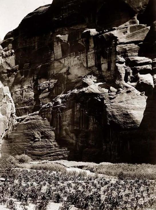 Navajo Cornfields Cantildeon Del Muerto. It was made in 1906