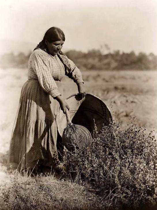 Pomo Indian Woman Gathering Seeds. It was created in 1924