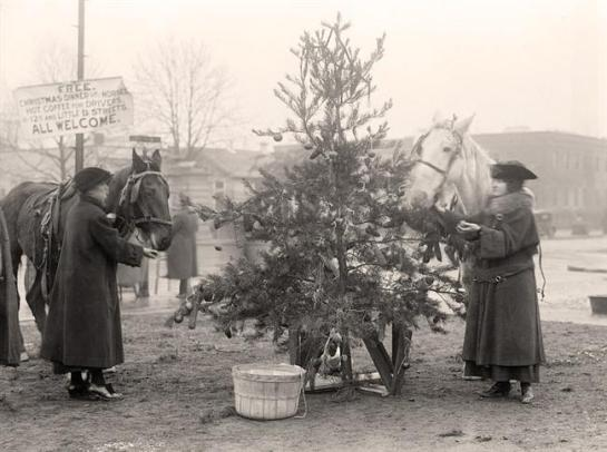Christmas-Horses-Tree-For Christmas Tree For Horses. It was taken in 1918