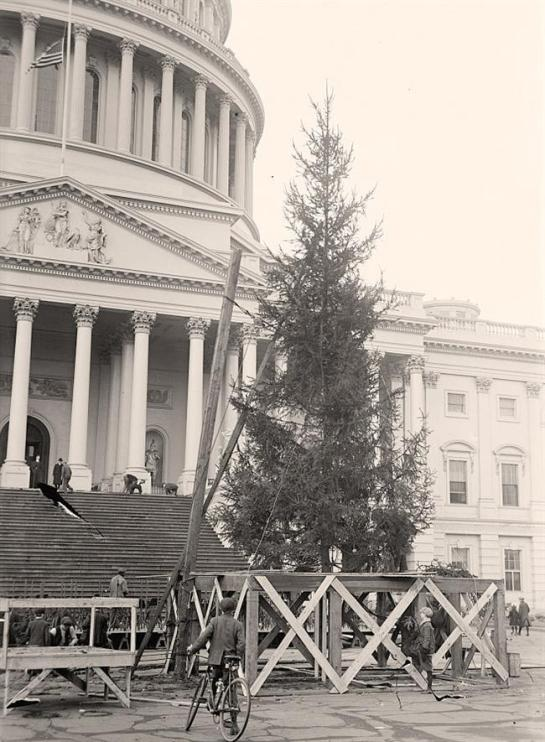 Christmas Tree at Capitol. It was created in 1913