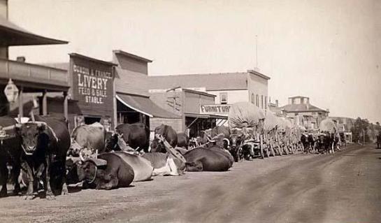 Ox teams on Main St.,Sturgis, Dakota Territory. It was taken in 1887