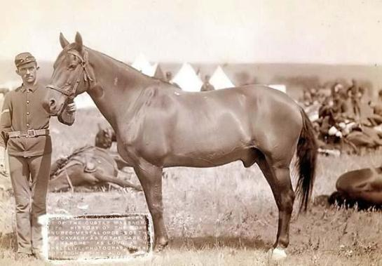 "You are looking at an artistic picture of ""Comanche,"" the only survivor of the Custer Massacre, 1876. History of the horse and regimental orders of the 7th Cavalry as to the care of ""Comanche"" as long as he shall live. It was created in 1887"