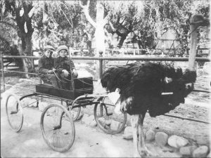 ostrichcart